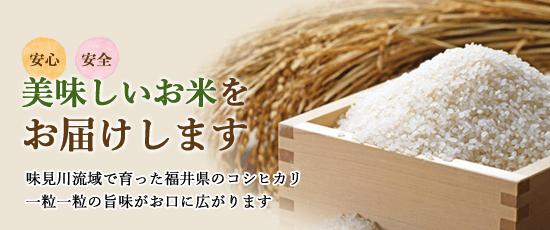 福井県 コシヒカリ通販