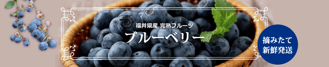 福井県 ブルーベリーの通販
